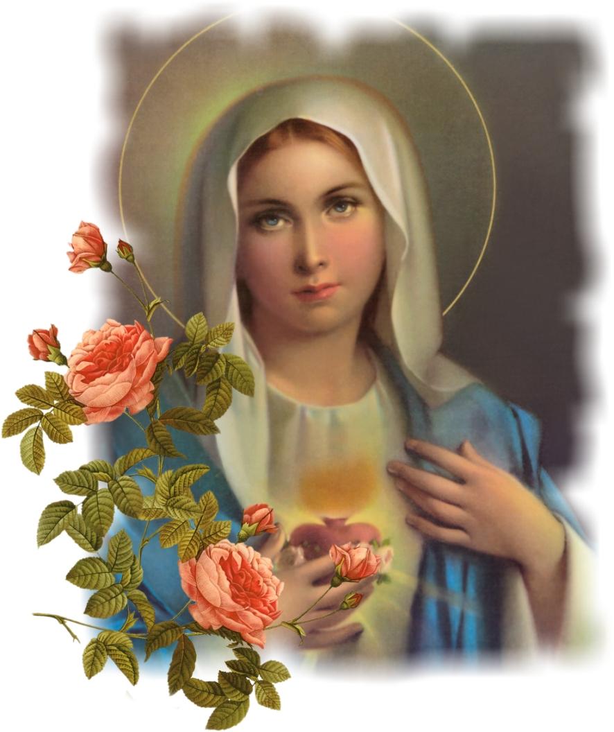 Album thánh ca Dâng Mẹ cả trời hoa.