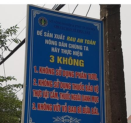 vua-rau-an-toan-tai-ha-noi-2-.jpg